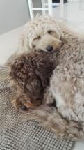Capu loves Ellie