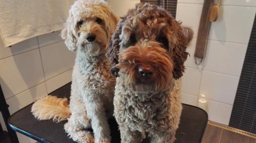 Capu and Ellie in hair cut