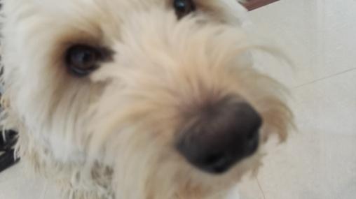 Capu and his nose :)