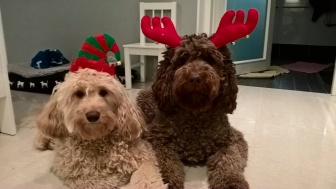 Christmas feelings - Capu and Lili deers :)