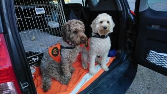 Ellie and Capu heading to work