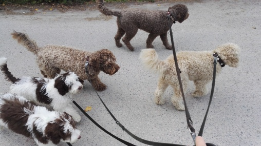 Walking with the all five