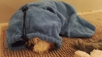 Maggie is totally tired after a bath