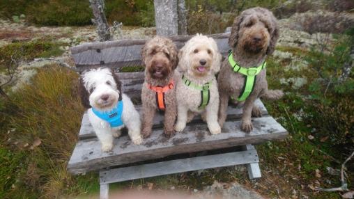 Maggie, Ellie, Capu and Lili in 10/2018