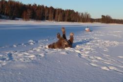 Lili loving the snow