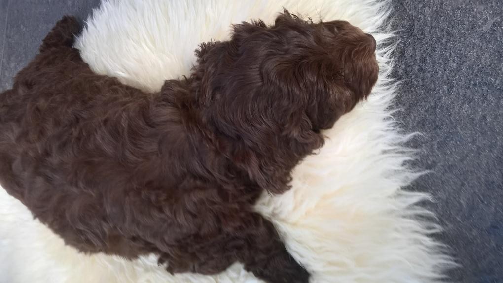 Ellie puppy 2017